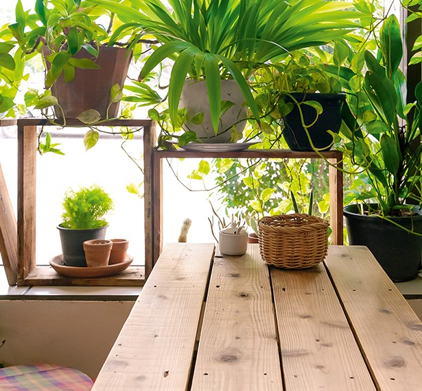Don't accept pot luck when it comes to house plants, writes Mary Lovell-Smith. Bringing choice botanicals inside is an easy way to commune with nature